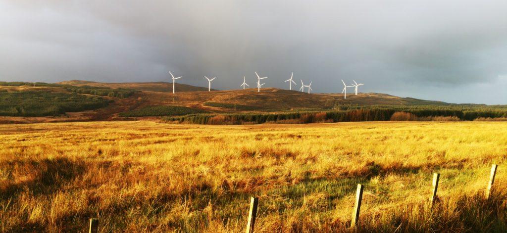 Vėjo jėgainės geltoname rugių lauke